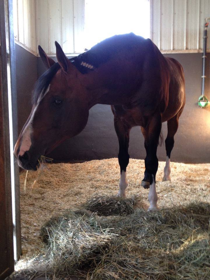 Portland L in his home stall, twenty years young.
