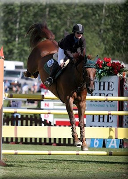 """Woody"" Equitop Farm show jumper & KEG Grand Prix winner-- now retired from sport."
