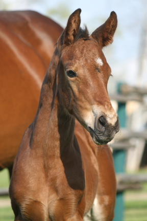 Filly by Portland L, bred and owned by Johane Janelle.
