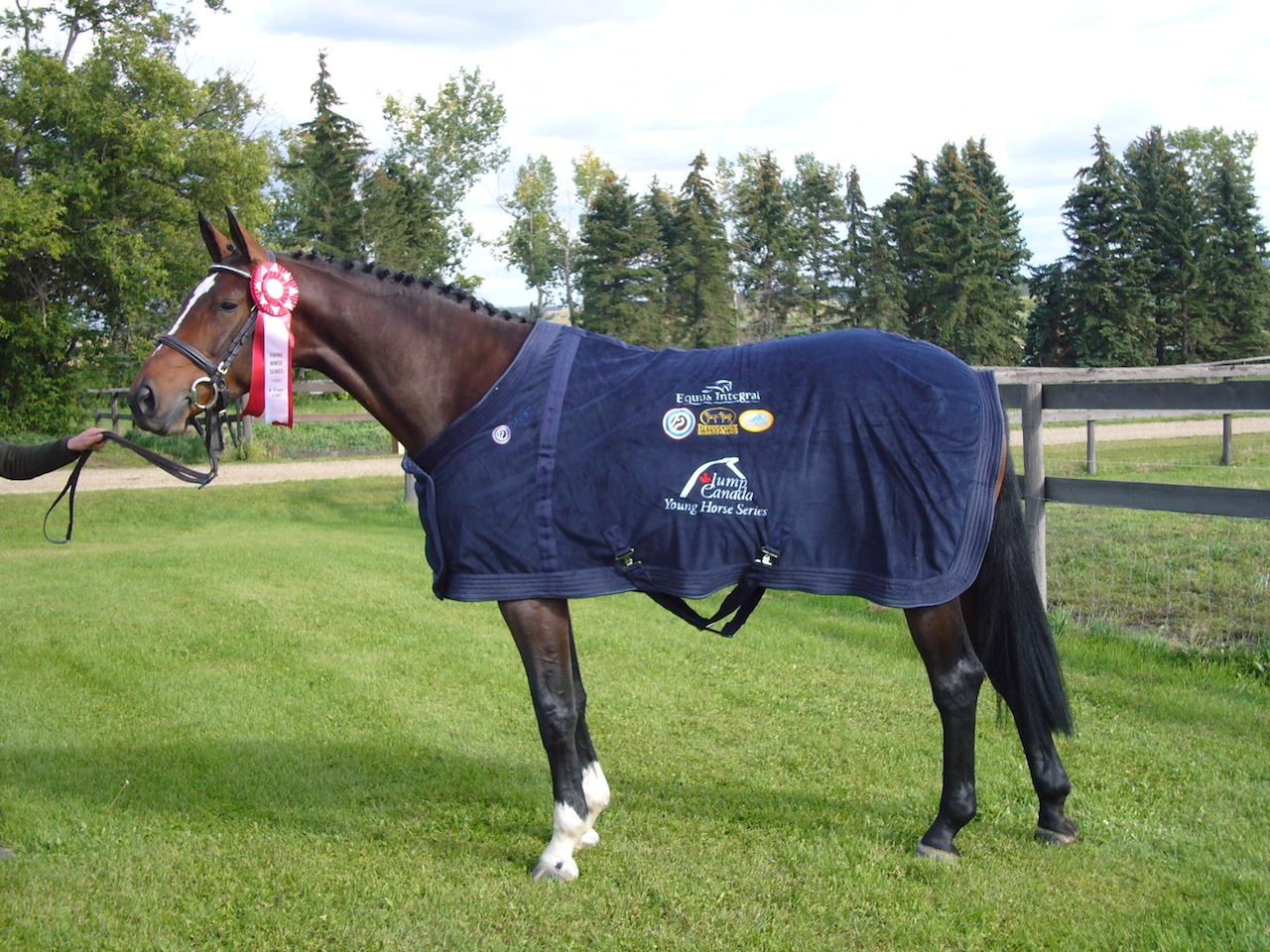 Phyline, by Portland L - Western Canadian Young Horse champion for 4 year old horses, bred by Equitop Farm.