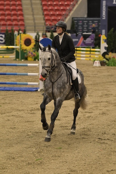 Casparo at the Royal West Tournament with rider Beke Brinkmann (One)