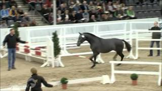 2011 Hanoverian Stallion by Coupe de Coeur