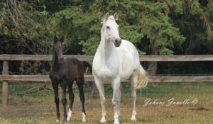 Mares & Youngstock